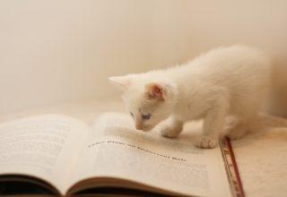 本の上のネコ