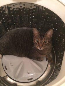 洗濯機の中のネコ