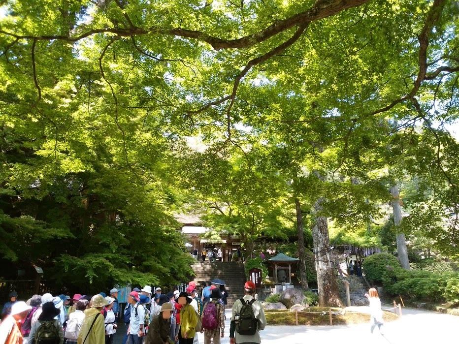 大興禅寺の新緑